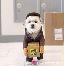 Ups Dog Costume Size Chart Ups Driver Dog Costume