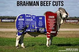 Upgrading of breed between 1950and 1960. Breed Spotlight Brahman Cattle Livestock Nerd