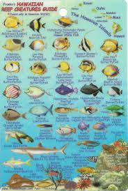 Oahu Fish Chart Hawaiian Islands Reef Creatures Fish Id Mini Card By Frankos Maps Ltd