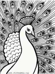 Coloring Pages For Adults Peacock At Getdrawingscom Free For