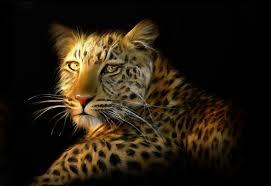 lion tiger leopard large 10 x 8 inch