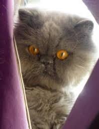 Pet Adoption Stories - Dr. Kitty Phelps | Petfinder