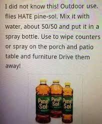 25 unique get rid of flies ideas