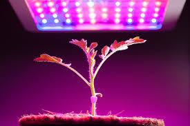 lighting for houseplants. Understanding The Basics Of Grow Lights For Indoor Plants And Gardening Lighting Houseplants M