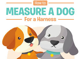 How To Measure A Dog For A Harness Easy Step By Step Guide