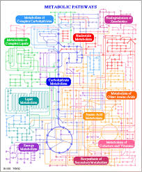 Metabolic Pathways Chart The Origin And Evolution Of Metabolic Pathways Why And How