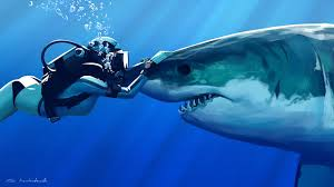 shark wallpaper hd. Perfect Shark Wallpapers ID281761 For Shark Wallpaper Hd W