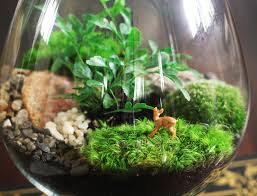 how to create amazing terrariums that ll green up your space year round inhabitat green design innovation architecture green building