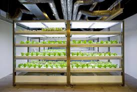 indoor hydroponic vegetable garden. Hydroponic Vegetables Growing Underground At Pasona Headquarters. Via Pasona. Indoor Vegetable Garden A