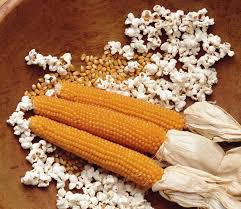 Growing Popcorn Popcorn 20 Seeds For Growing Your Own Cinema Style Pop Corn