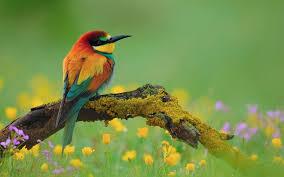 Birds wallpaper hd, Bird wallpaper ...