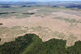amazon rainforest deforestation. Contemporary Rainforest In Amazon Rainforest Deforestation O