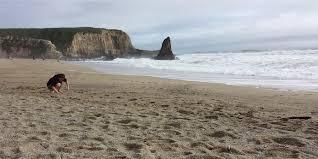hunting for sea glass at davenport beach california