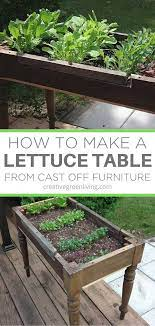 lettuce garden in a diy raised bed