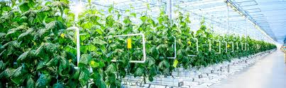 China <b>Plant Growth Strip Light</b> Manufacturers and Factory, Suppliers ...