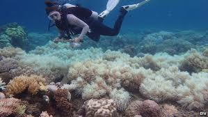 the impact of climate change on the great barrier reef the the explains