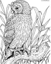 Small Picture 267 best Coloring pages Birds images on Pinterest Coloring books
