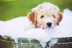 7 bath time mistakes pet pas make