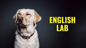 Black Lab Puppy Weight Chart English Lab Facts About English Vs American Labrador