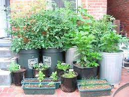 gardening idea 2 luxury home vegetable garden ideas landscaping ideas for small yards on a budget
