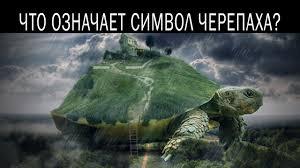 талисман черепаха и его значение