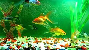 Fish Tank Template Velorunfestival Com