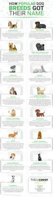 how por dog breeds got their names infographic