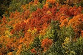 computer change autumn plant beauty