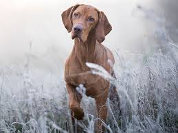 Antifreeze poisoning in dogs   Dog health   The Kennel Club