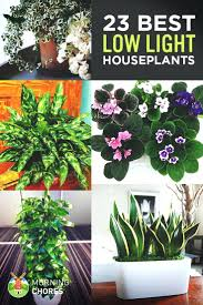 house plants large to uk nz
