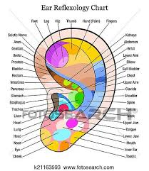 Reflexology Chart Ear Reflexology Chart Description W Clipart K21163593