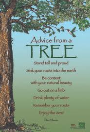 advice from a tree stand tall and proud sink your roots into the earth be content baker furniture therian anthropologie plantation home west