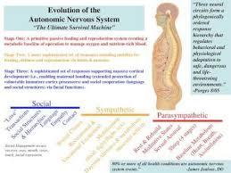 Polyvagal Theory Chart