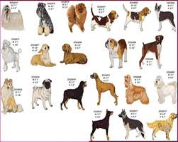 dog breeds alphabetical. Brilliant Breeds List Of Dog Breeds Alphabetical In