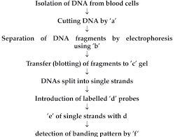 The Following Is The Flow Chart Highlighting The Step In Dna