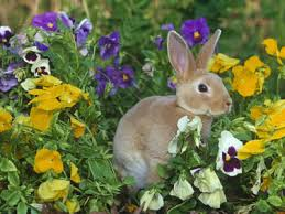 how do i keep rabbits out of my garden. Fine Rabbits Bunny In Garden  With How Do I Keep Rabbits Out Of My
