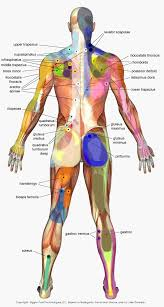 Muscle Pressure Points Chart Trigger Points Chart Trigger Point Charts Massage