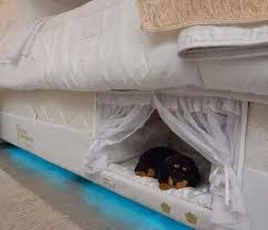 Image result for images of small dog pushing people off a bed