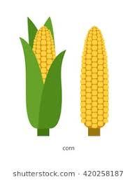 ear of corn clipart.  Corn Yellow Ear Of Corn With Green Leaves With Ear Of Corn Clipart P