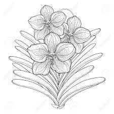 概要バンダ蘭花と葉は白い背景で隔離の花束着生植物南国の花夏デザインと塗り絵の輪郭のスタイルでエ