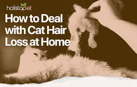 home treatment for cat hair loss top 4