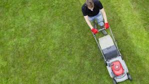 Budget Lawn Care The Budget Friendly Lawn Care Tips You Need Nation Com