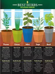 5 kitchen herbs for small garden spaces
