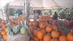 flamingo road nursery fall harvest festival davie fl 9 29 12