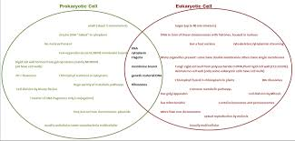 Compare Prokaryotic And Eukaryotic Cells Venn Diagram Venn Diagram Eu Pro Cell Process