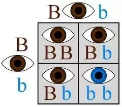 Eye Gene Chart If Blue Eyes Came From One Ancestor Where Or Who Do Green