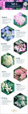 types of hydrangeas