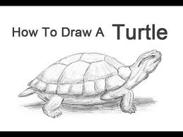 Small Picture How to Draw a Turtle Red Eared Slider YouTube