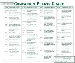 Vegetable Companion Planting Charts Herbs Companion Planting Goldworth Info
