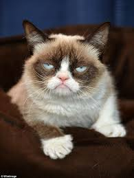 grumpy cat i had a birthday once. Modren Grumpy Grumpy Cat Limited Sued A Beverage Company In 2015 Claiming The  Created Unauthorized Coffee Products And I Had A Birthday Once